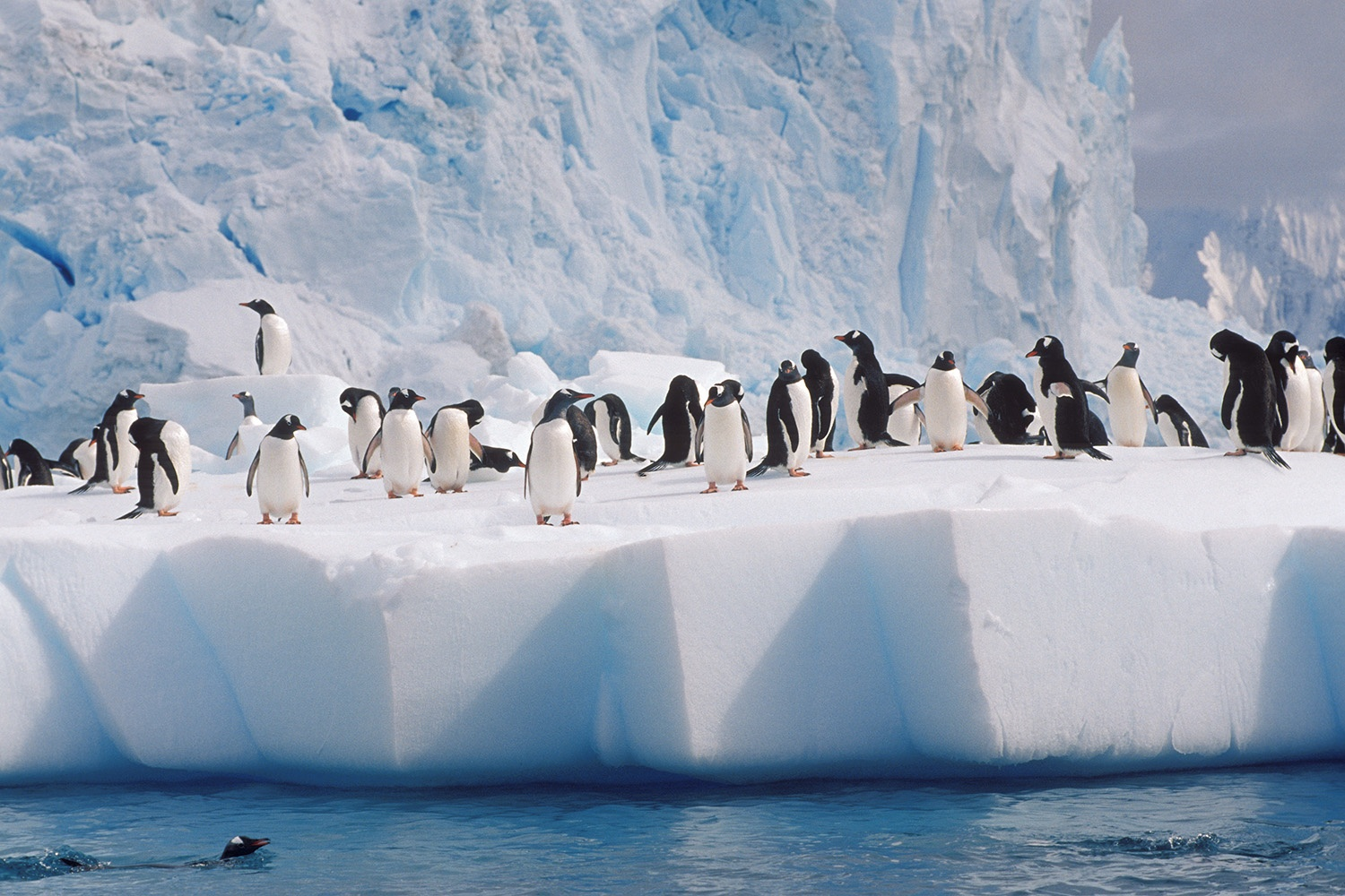 Antarctica cruises tours trips vacations for Best trips to antarctica